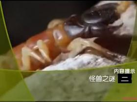 《大真探》cctv10大真探之怪兽之谜(二)