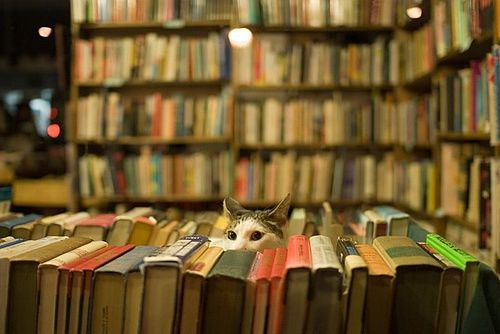 图书 书籍 文章 互联网新手